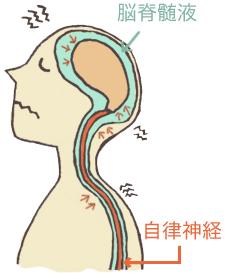 寺山整骨院頭蓋骨矯正の特徴
