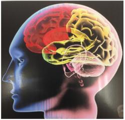 頭蓋骨矯正(CSFプラクティス)とは